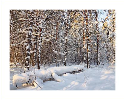 В зимнем лесу. Фотограф из Кемерово Алексей Поселенов