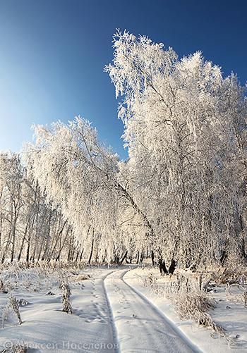 Зимний пейзаж после оттепели