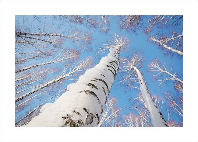 Зимний пейзаж. В Рождественском лесу
